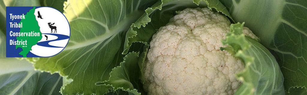 Cauliflower Website Header