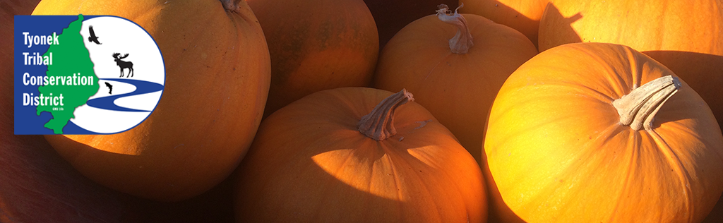 Pumpkin Website Header